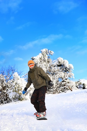 Snowboarder moves down the slope on a background of snow-covered trees photo