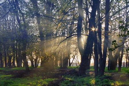 The rays of dawn sunlight pass through the mist of dawn in the woods Stock Photo