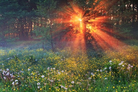 The rays of dawn sunlight illuminate the clearing with wildflowers and dandelions