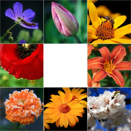 Collage of flowers
