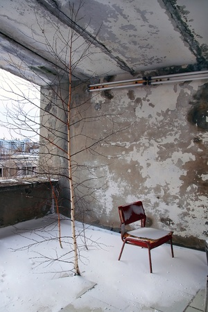 Trees on the roof of the hotel in the city of Pripyat, abandoned after disaster at the Chernobyl nuclear power plant in 1986 photo