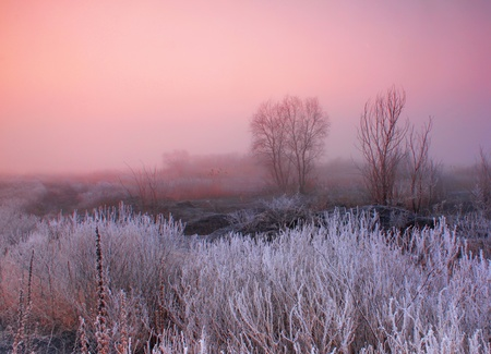 Misty dawn at the forest with rime