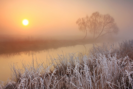 Misty dawn at the forest lake with rime
