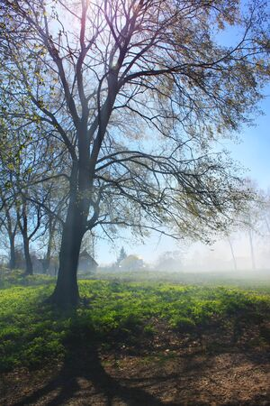 Misty forest in spring morning photo