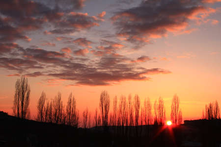 Sunset sky over the trees photo