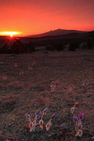 Flowers at sunset on the mountain top Stock Photo - 9565215
