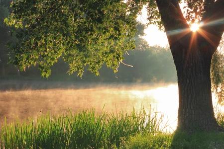 lagos: Amanecer brumoso en el lago