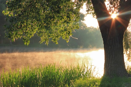 Misty dawn at the lake Stock Photo - 9565239