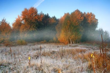 Misty sunrise in autumn forest
