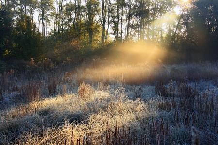 Frost on grass in misty aunumn dawn Stock Photo