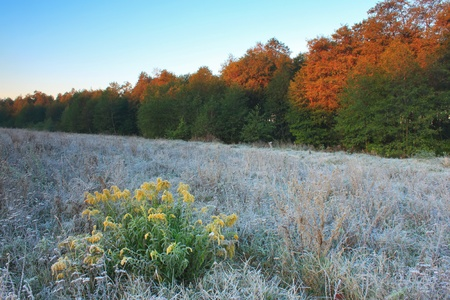 Frost on the trees in autumn dawn photo