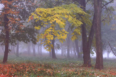 Misty autumn forest Stock Photo - 10589020