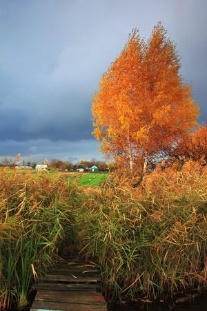 Stormy autumn day Stock Photo - 10659240