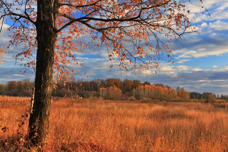 Sunset on the edge of  the autumn forest