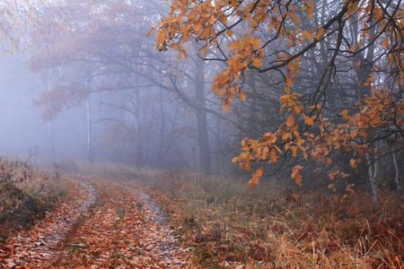 Misty autumn forest Stock Photo - 10659238