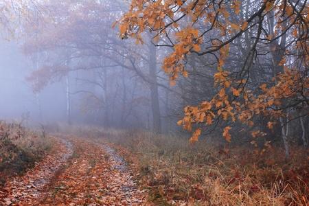 exhilarating: Misty autumn forest