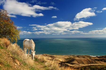 horses in field: The white horse near the sea