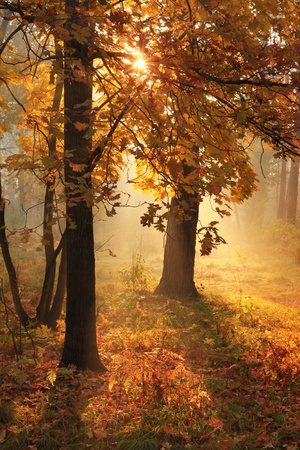 sunrays: Misty morning in autumn forest Stock Photo
