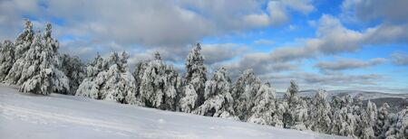Panorama of the winter forest in the mountain photo