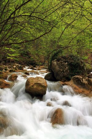 Spring river in forest photo
