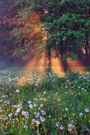 Misty spring forest at sunrise Stock Photo