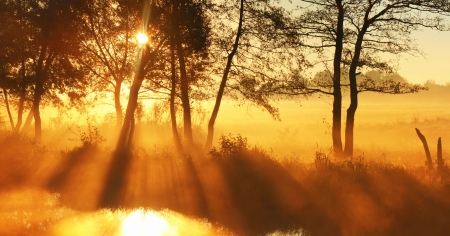 forrest: Panorama rays of the rising sun