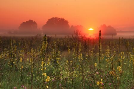 Summer dawn on the field photo