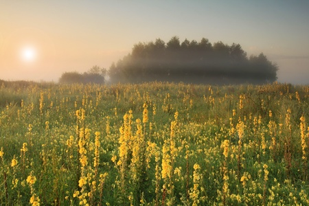 Misty sunrise on the field photo
