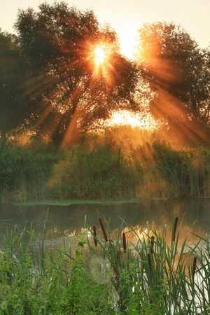 Sun rays on sunrise on the river photo