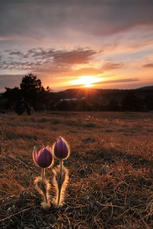 A couple of flowes on sunset in mountains Stock Photo