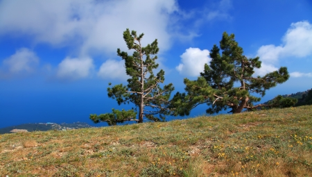 Tree on the blue sky background in mountains photo