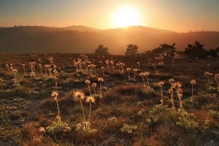 Flowers on the sunset in the valley photo