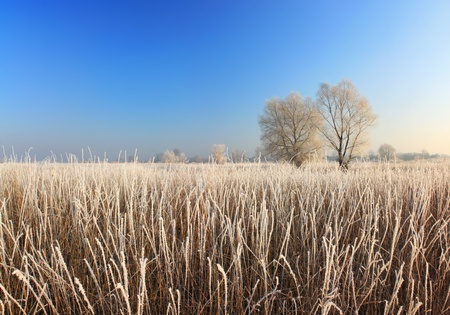 Field in rime in autumn sunrise photo