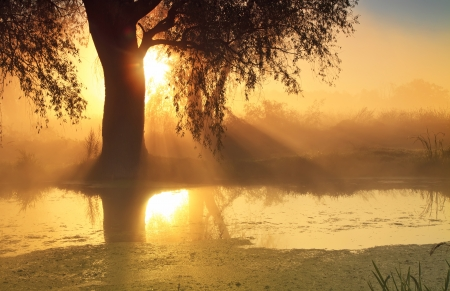 Sunbeams in misty morning on the river photo