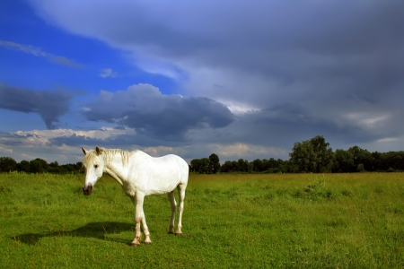 Horse on the field against a stormy sky photo