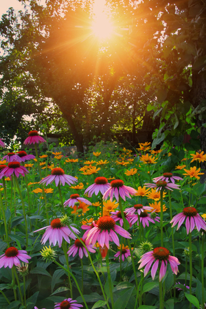 Flowers at sunset photo