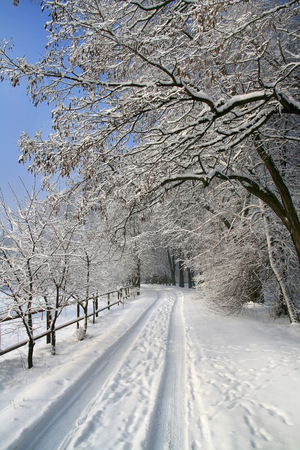 Snow-covered road in the forest photo