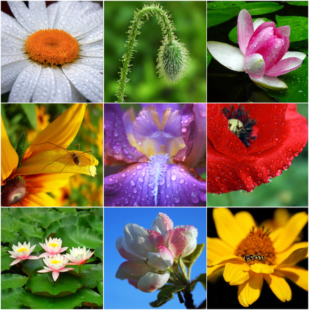 Collage of flowers photo