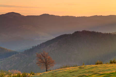 Lonely tree in the mountains at dawn photo