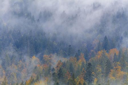 Foggy Autumn on a wooded hillside