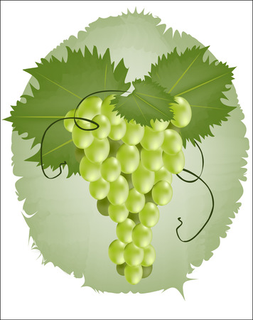 white riesling grape: Bunch of green grapes