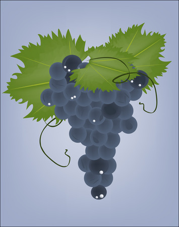 fruitful: realistic grapes