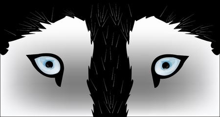 siberian husky: Husky dog - vector illustration