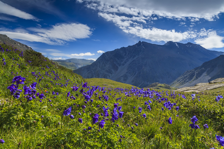 Beautiful mountain landscape with flowers and blue sky  photo