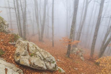 Mysterious foggy autumn forest  photo
