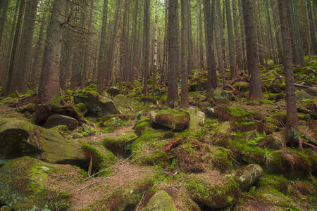 mistic: Beautiful mysterious forest with large mossy stones Stock Photo