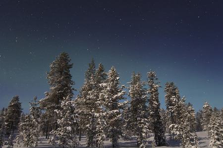 Beautiful northern lights over snowy forest and snow-covered trees photo