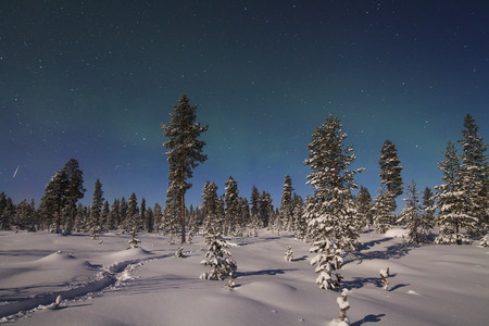 magnetosphere: Beautiful northern lights over snowy forest and snow-covered trees