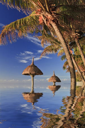 Reflection of tropical palm trees in the ocean. Mauritius.