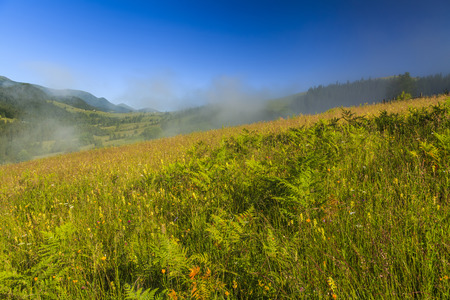 wasatch: View of the mountain landscape with fog and wildflowers